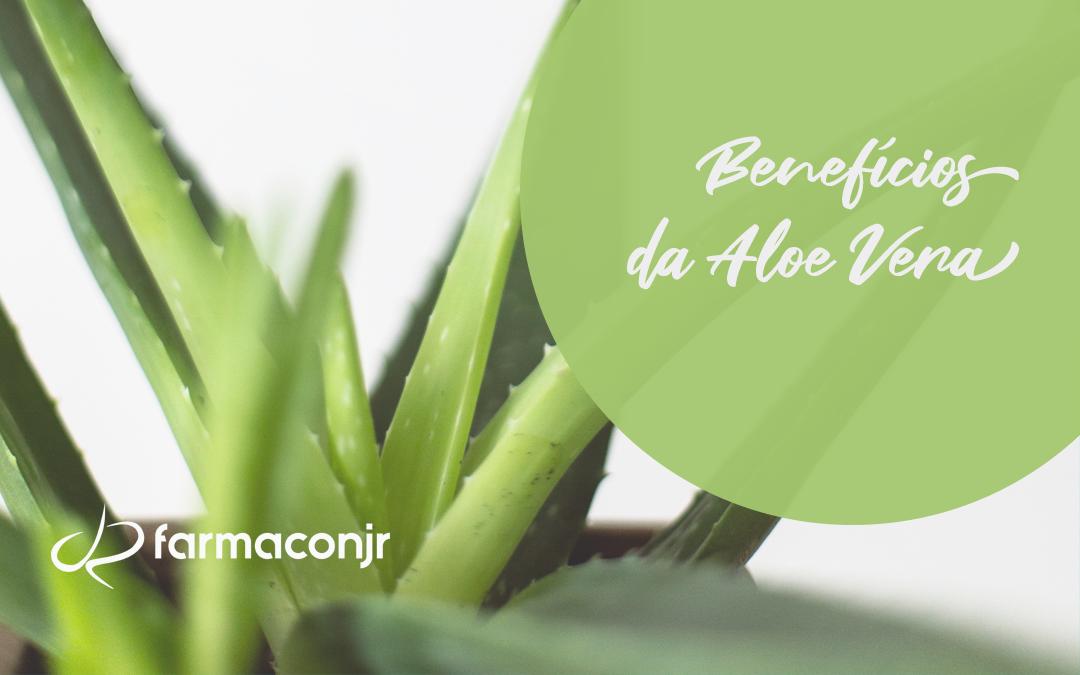 Aloe Vera: saiba mais sobre seus benefícios!