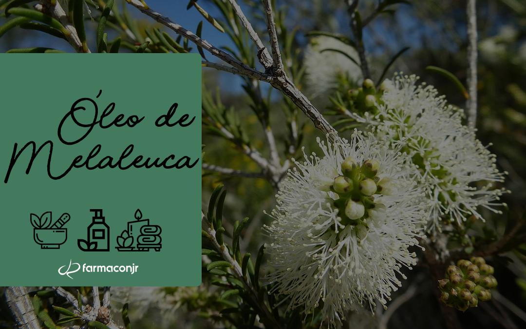 Óleo de Melaleuca: conheça seus benefícios!
